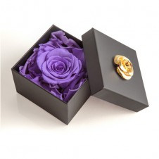 FOREVER PURPLE IN A BOX