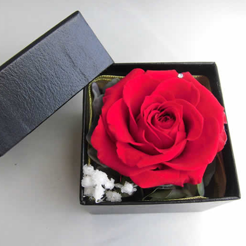 FOREVER RED ROSE IN A BOX