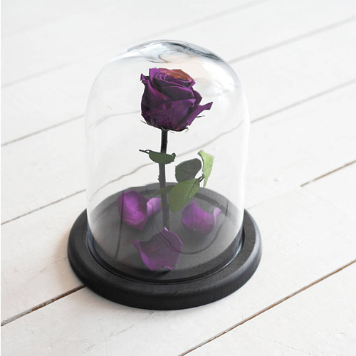 PURPLE ROSE IN GLASS DOME