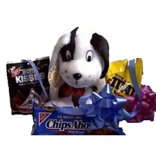 Puppy with Chocolate and Cookies