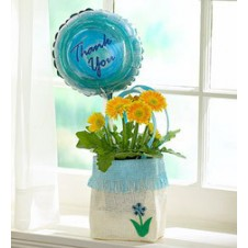 6 Pcs Orange Gerbera in Vase with Balloon