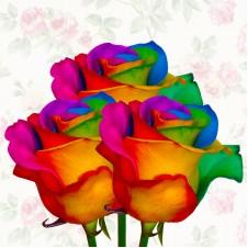 Rainbow Rose 3pcs
