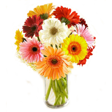 Daisies / Gerberas - Online Flower Delivery to Manila