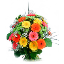 1 Dozen Assorted Gerbera Bouquet w/ Some Greeneries