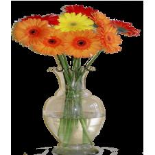10 Stems Mixed Gerberas in a Bouquet