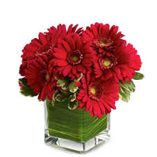 10 Stems Red Gerberas in a Bouquet