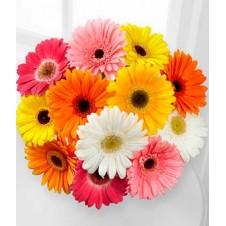 12 Gerbera Bouquet