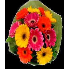 12 Stems Mixed Gerberas in a Bouquet