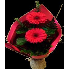 2pcs. Large Gerberas Bouquet