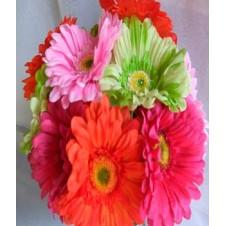 6pcs. Assorted Gerberas in a Bouquet