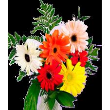 6pcs. Gerberas Bouquet