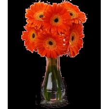 6pcs. Orange Gerberas in a Bouquet