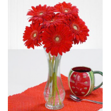 6pcs. Red Gerberas in a Bouquet