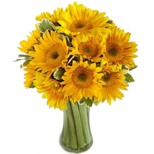 Endless Summer Sunflower -12 Stems in a Bouquet