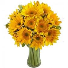 Endless Summer Sunflower -15 Stems in a Bouquet