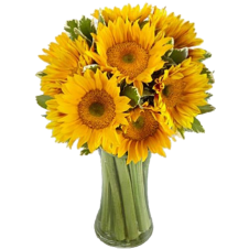 Endless Summer Sunflower -9 Stems in a Bouquet