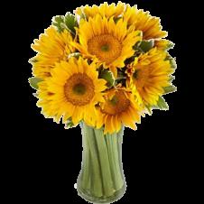 Endless Summer Sunflower -9 Stems in a Bouquet