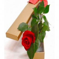 One Red Rose in a Box