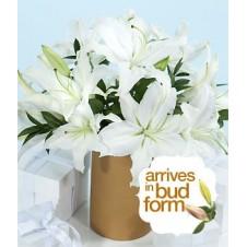 18pcs White Lilies