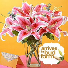 5pcs Pink Lilies in a Vase