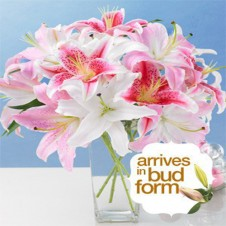 12pcs Mixed Pink and White Lilies in a Vase