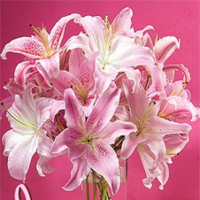 18pcs Pink Lilies in a Vase