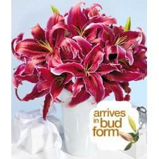 2 dozen Deep Red Lilies in a Vase