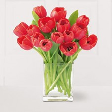 15pcs Red Tulips in a Vase