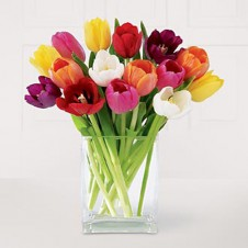 One Dozen Assorted Tulips in a Vase