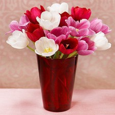 Mixed Pink, Red & White Fresh Tulips in a Vase