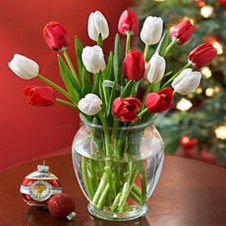 One Dozen Mixed Red & White Tulips in a Vase