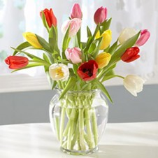 15pcs Mixed Color Tulips Tulips in a Vase