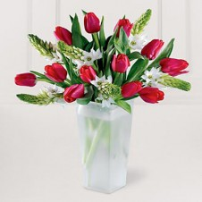 One Dozen Mixed Pink & White Tulips in a Vase
