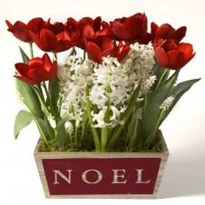 6pcs Red Tulips w/ White Seasonal Flowers in a Pot