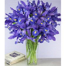 12 Purple Iris Flowers in a Vase