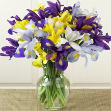 12 Mixed Iris Flowers in a Vase