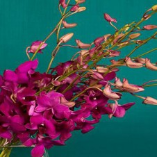 Purple Orchids in a Bouquet