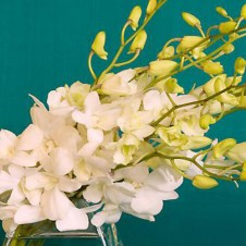White Orchids in a Bouquet