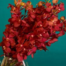 Red Vanda Orchids in a Bouquet
