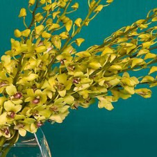 Yellow Vanda Orchids in a Bouquet