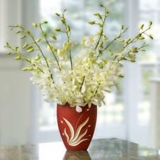 One Dozen White Orchids in a Vase