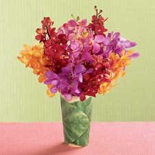 Mixed Colors of Orchids in a Vase
