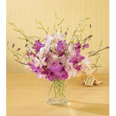 Mixed Purple & White Orchids in a Vase