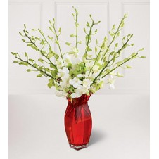 Two Dozen White Orchids in a Vase