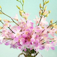 Pink Sprayed Orchids in a Vase