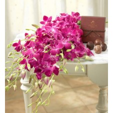 Two Dozen Purple Orchids