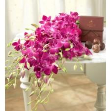 Two Dozen Purple Orchids