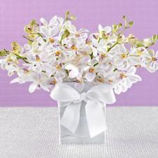 Three Dozen White Orchids in a Vase