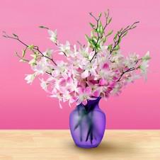 Mistine Dendrobium Orchids in a Vase
