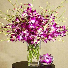 12 stems of Purple Dendrobium Orchids in a Vase